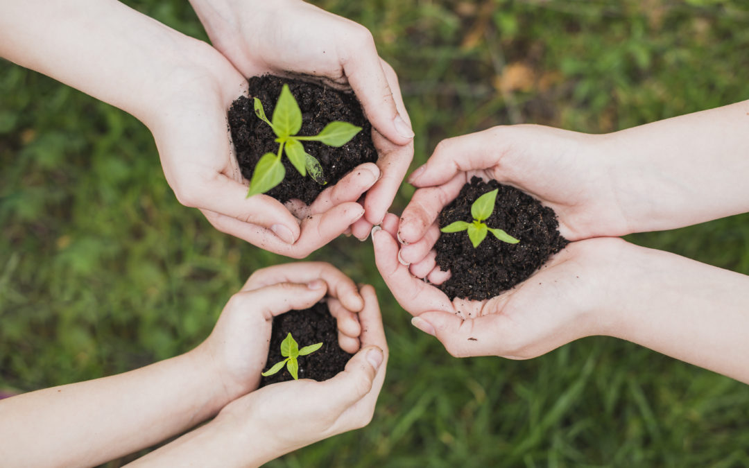 La biomassa com energia renovable